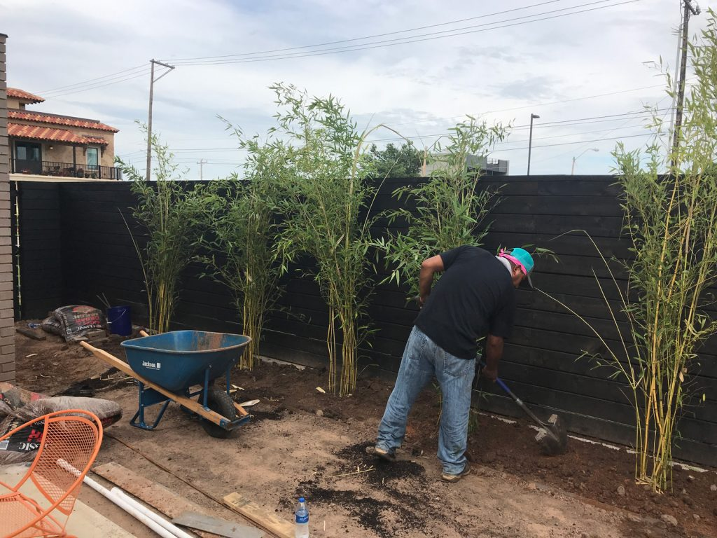 one of the team planting a fence row with tall bamboo