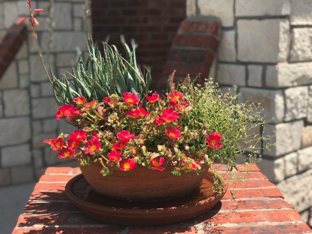 desert mixed container