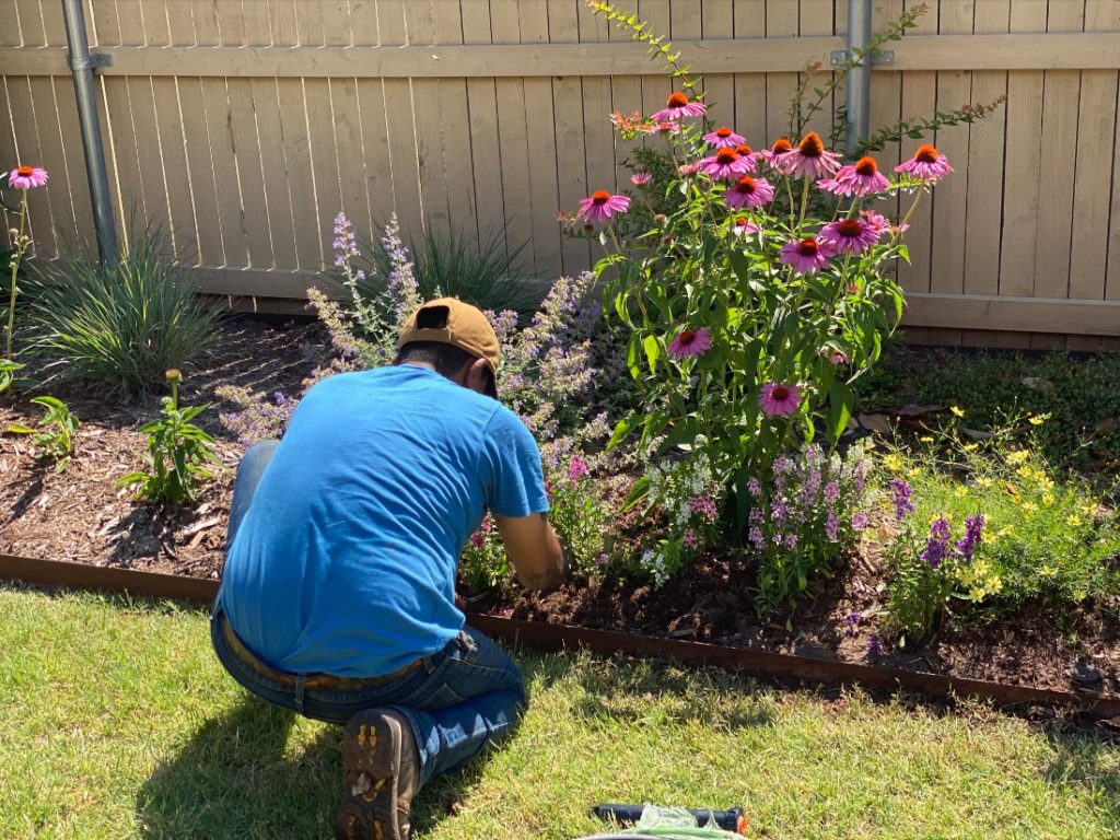 worker in the perennial border