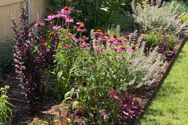 lovely flower border